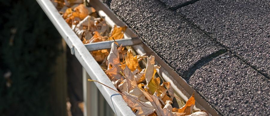 Leaves debris buildup in gutter