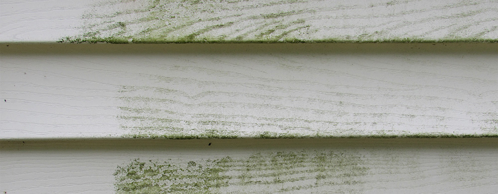 Mold and mildew on the siding of a house